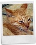 恋人岬のお猫様